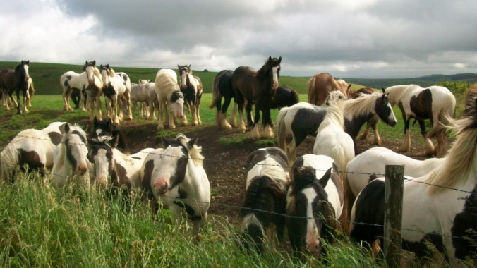 A field full of horses came over to greet us