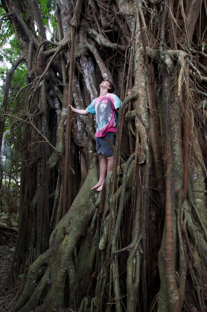 100 yr old Balete Tree