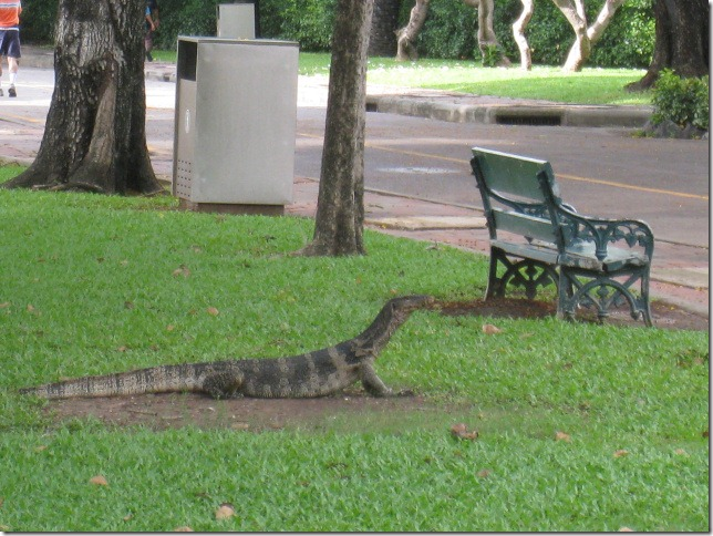 Monitor Lizard at Lumpini Park