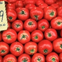 The Elusive Greek Tomato