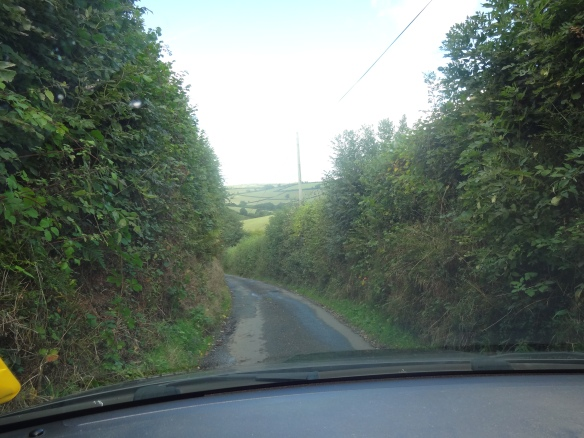 Devon Hedgerows