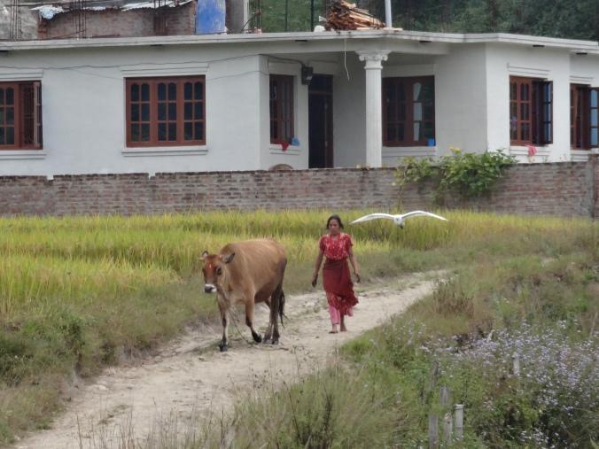 nepalese farming