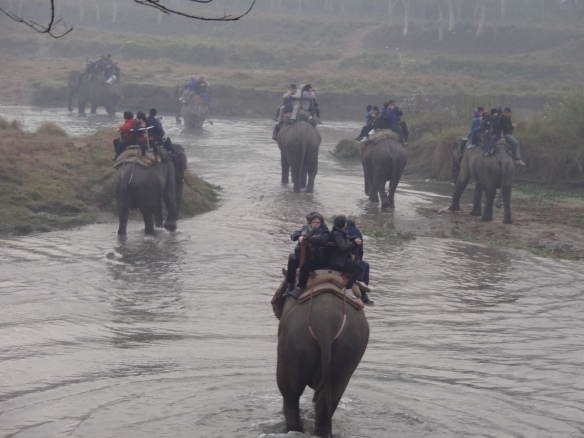elephant ride across a river