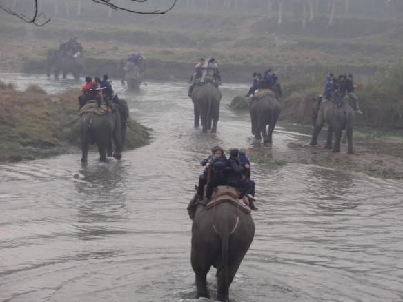 elephant ride across a river