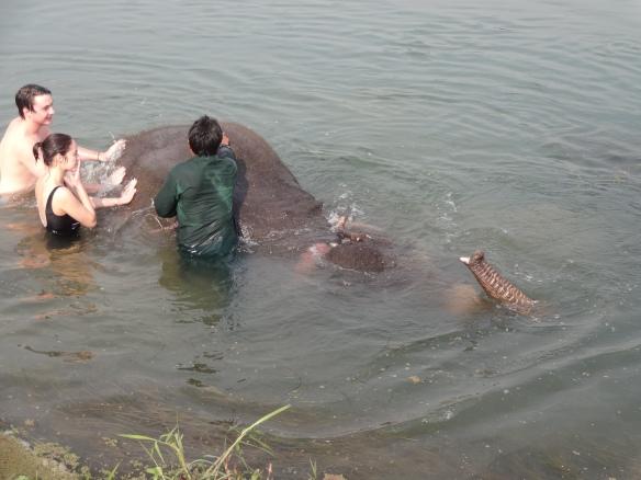 elephant snorkelling