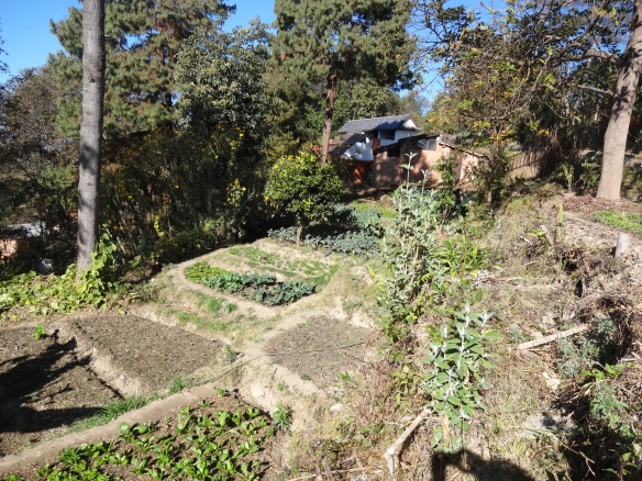 namobuddha organic garden