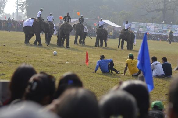 elephant football
