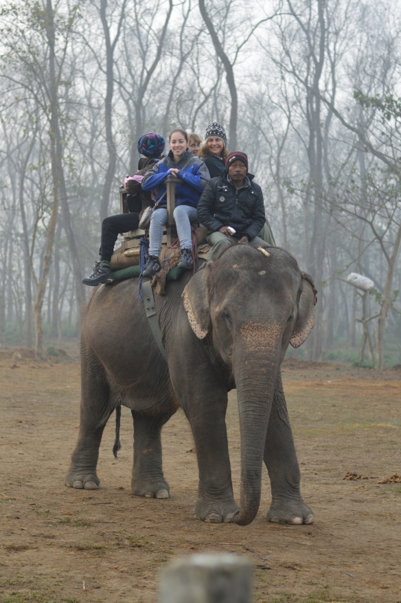 elephant ride, chitwan
