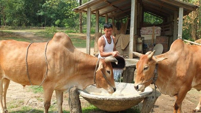 Organic farm in Chitwan