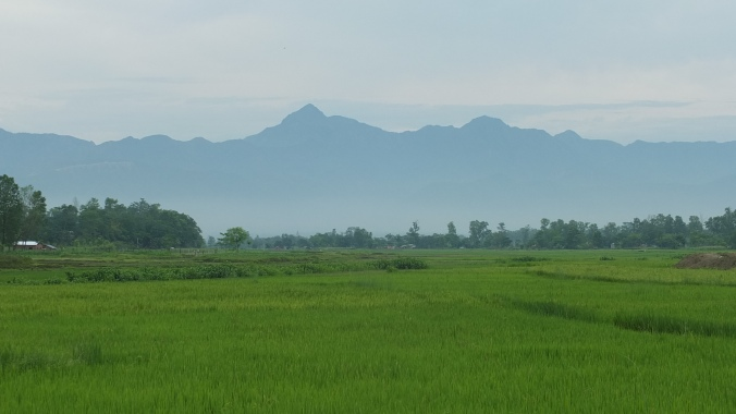 rice paddies and hills, Chitwan
