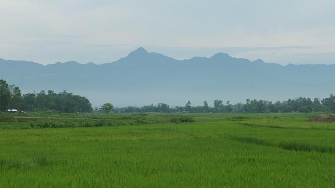 rice paddies and hills, Chitwan