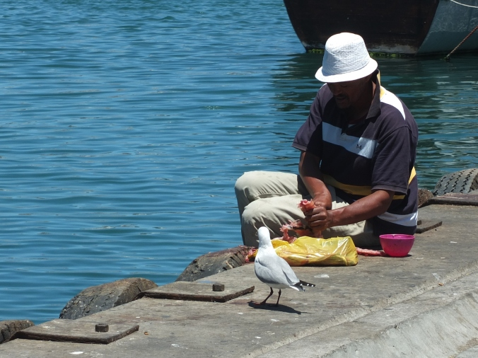 Hout Bay, Feeding a seagull, cape town, south africa