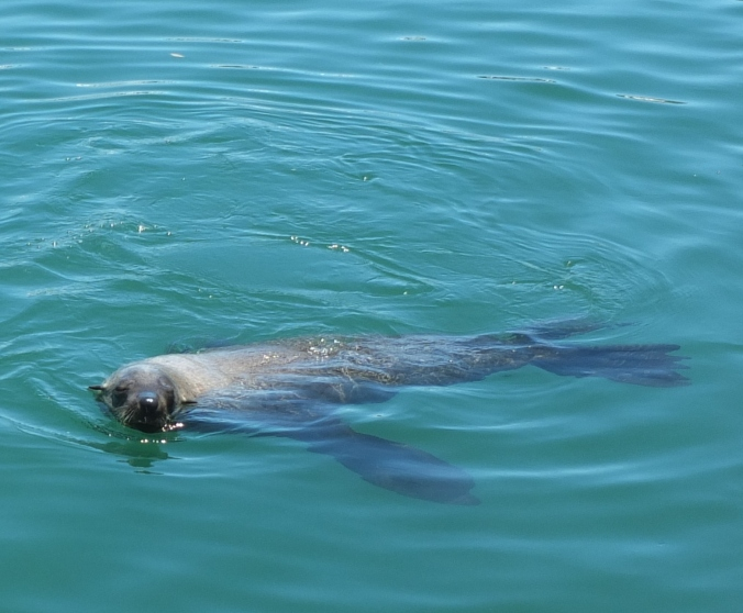 Seal, Cape Town, South Africa