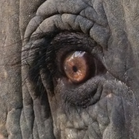 WPC:  Elephant Eyelashes