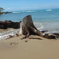 Discovering Treasure Beach