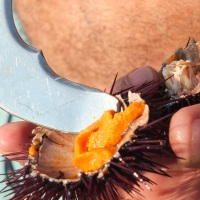 WPC:  Warning Sea Urchins!